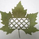 LorenzoDuran-hojas-talladas-12