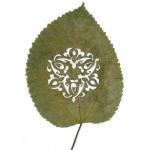 LorenzoDuran-hojas-talladas-15