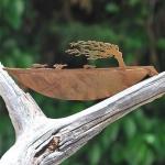 LorenzoDuran-hojas-talladas-5