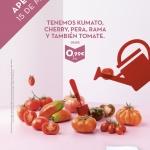 Aperturas_16-17_grafica_tomates
